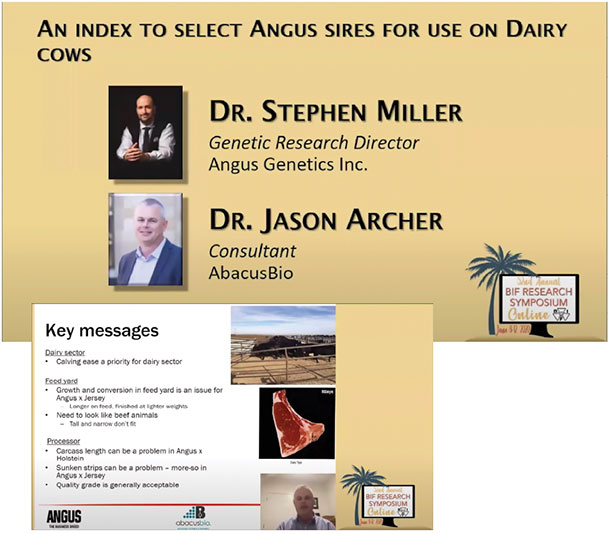 An index to select Angus sires for use on Dairy