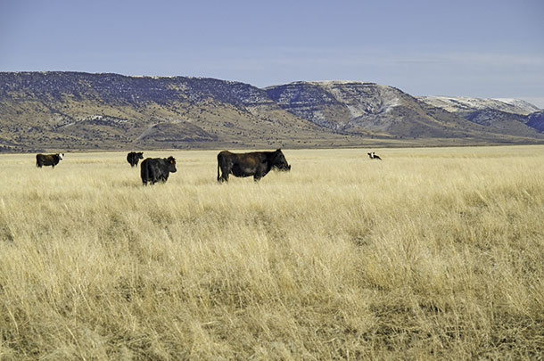 Ranch being grazed in the winter