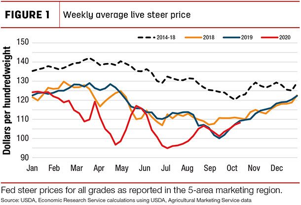 weekly average ive steer price
